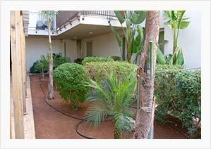 Communal Apartment Gardens